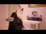 поющая собака :D