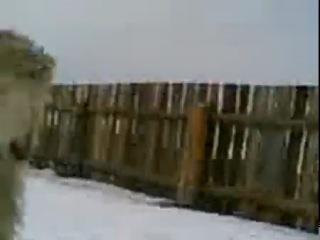 �� �� ����))) Combat SHEEP ��� ����� ������, ��� � ����� �������)))